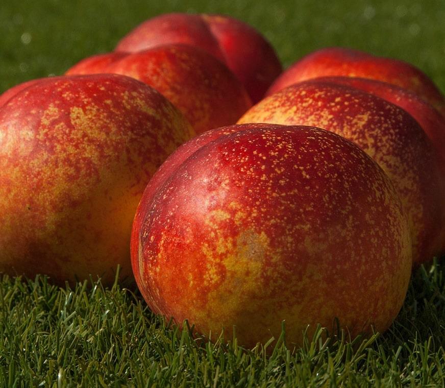 peach1-min.jpg