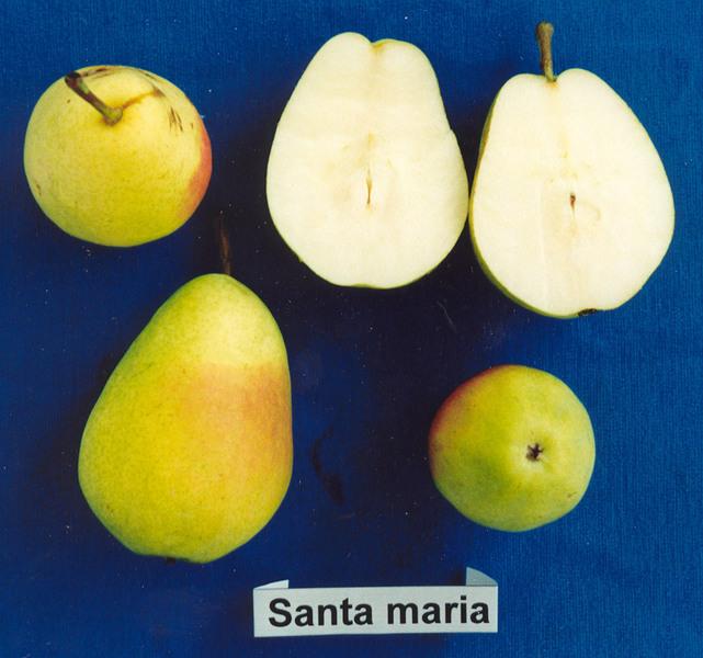 Santa_Maria.jpg